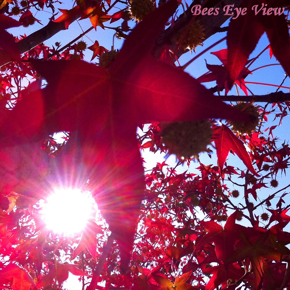 RedLeavesSun.jpg