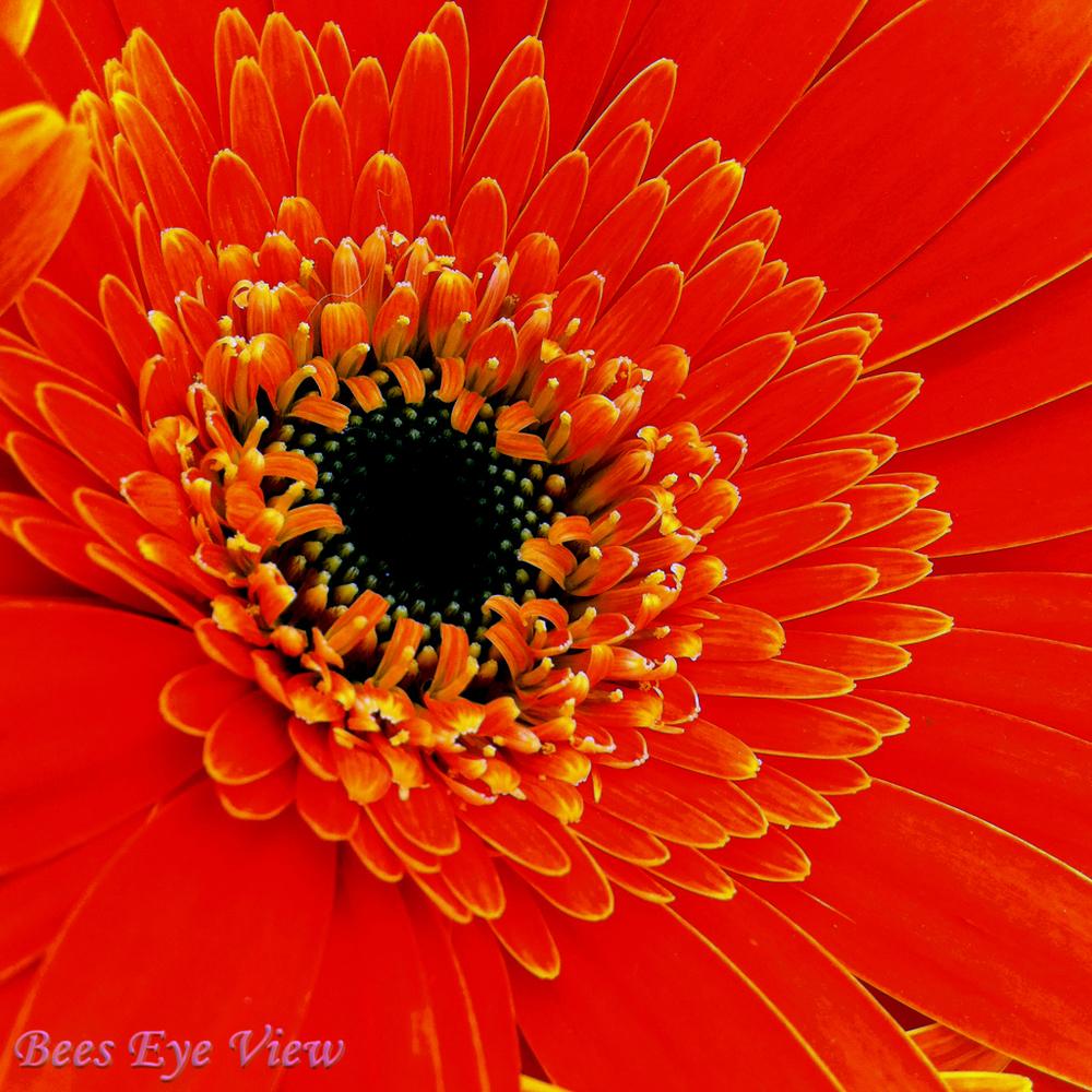 OrangeFlSq.jpg