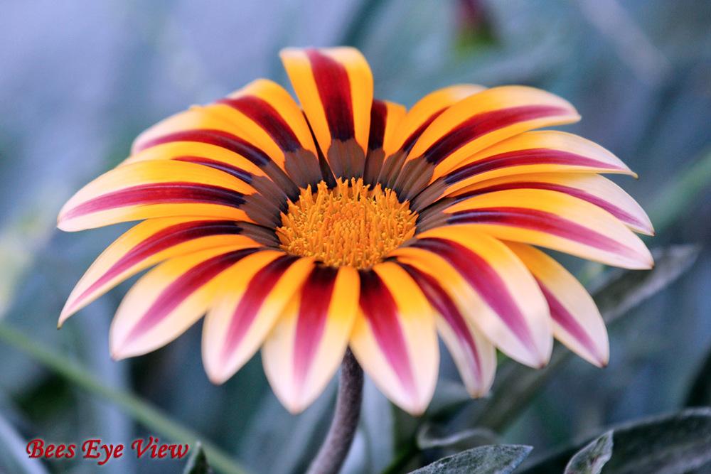 FloralFountain.jpg