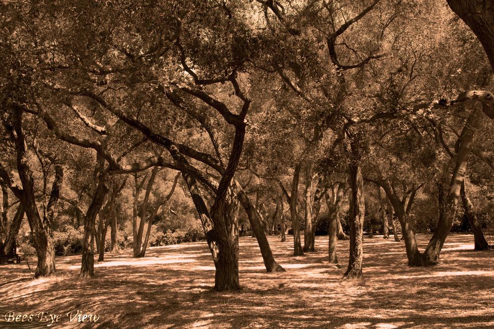 SepiaTrees.jpg
