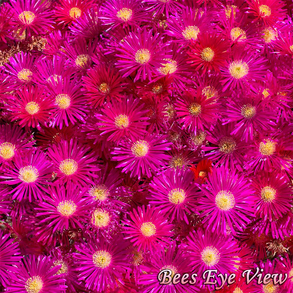 PinkFloodSq.jpg