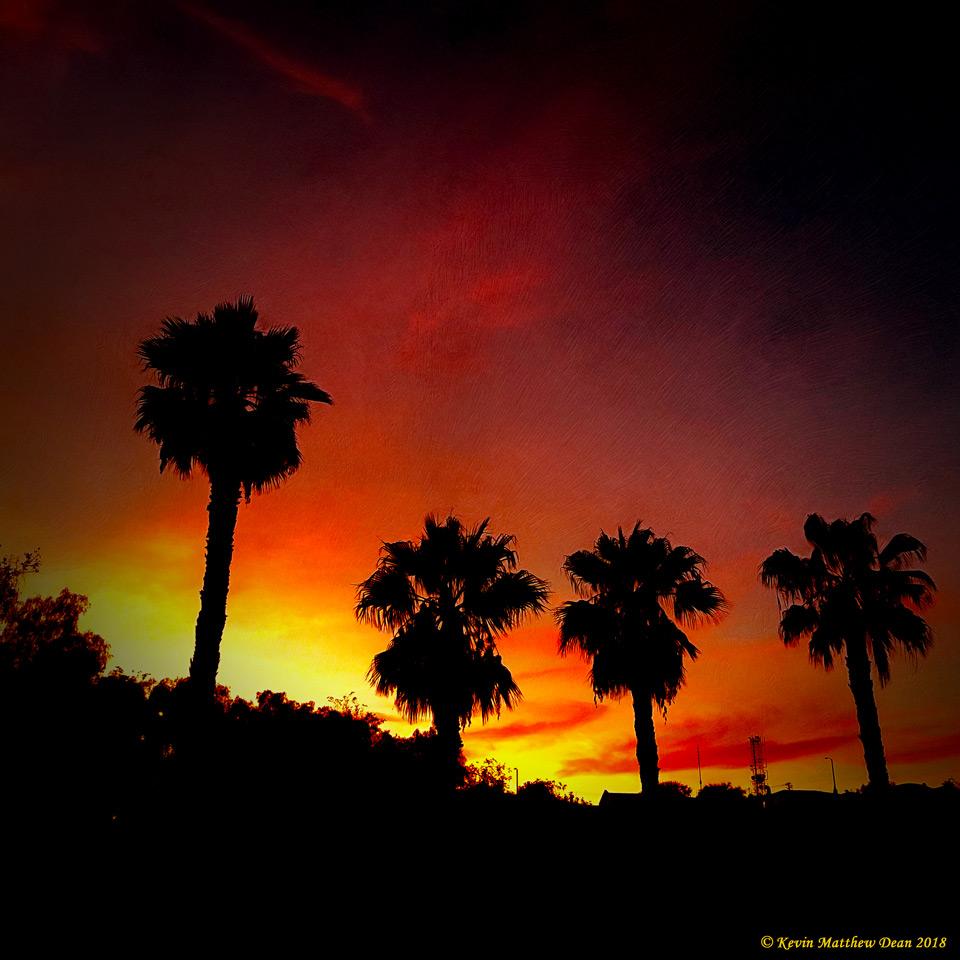 PalmsSilhouette.jpg