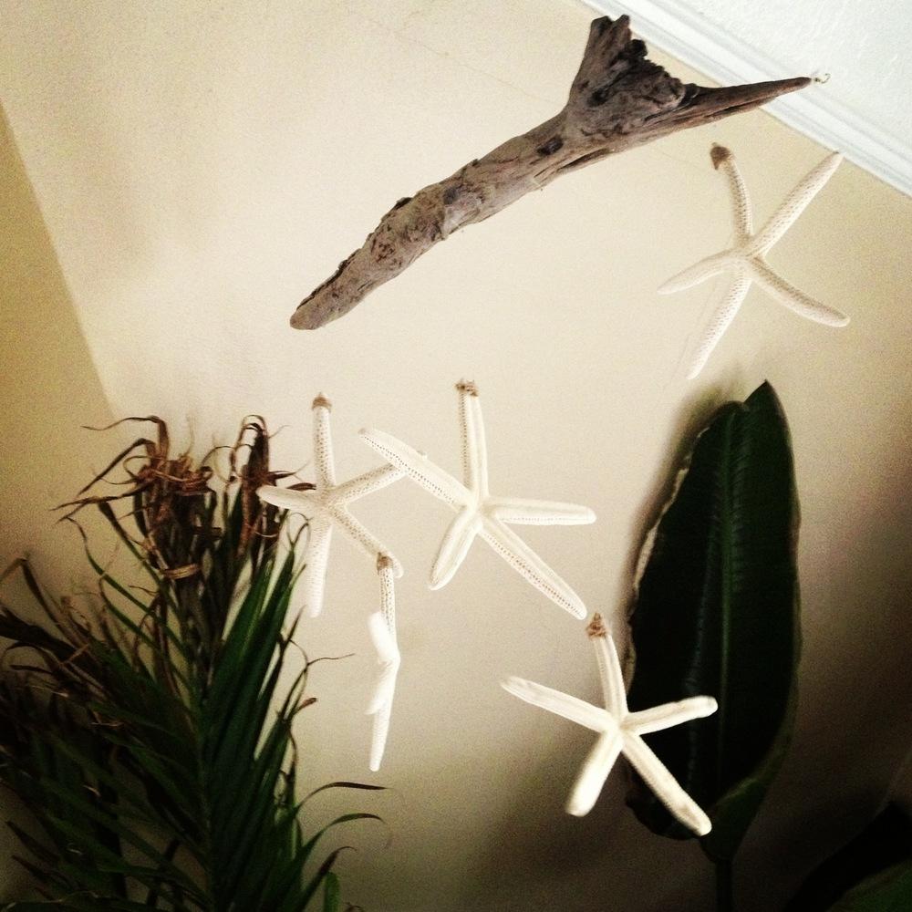 Driftwood & Starfish