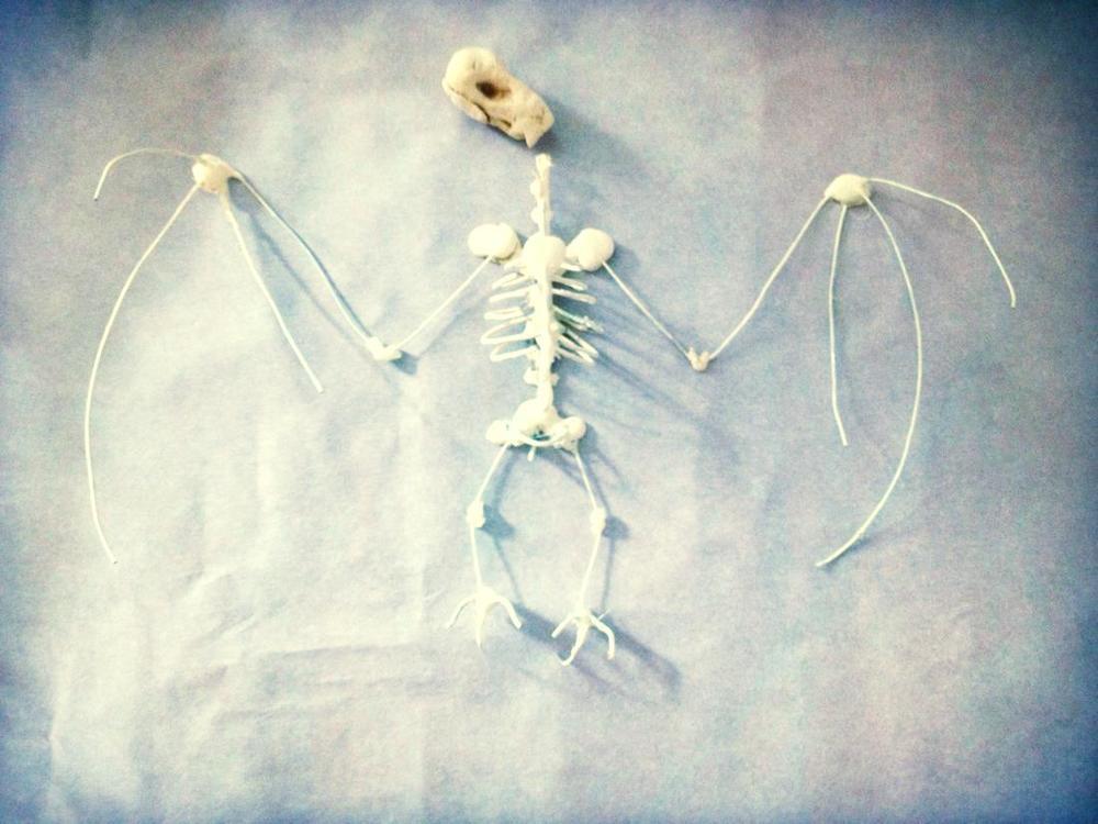 handmade_bat_skeleton_diy.jpg