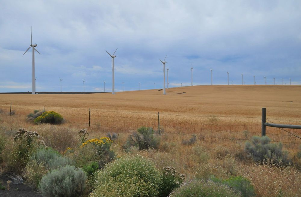Windfarm and wheat fields for miles between Columbia River crossing and Fosssil, Oregon.