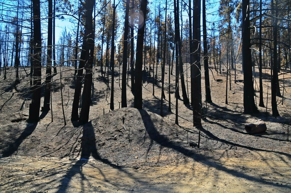 Forest fires still smoldering a week later.