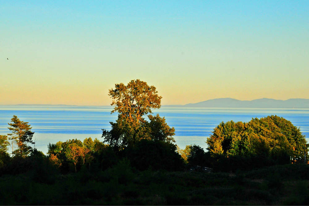 Studio View, Vancouver Island - Brandy Saturley