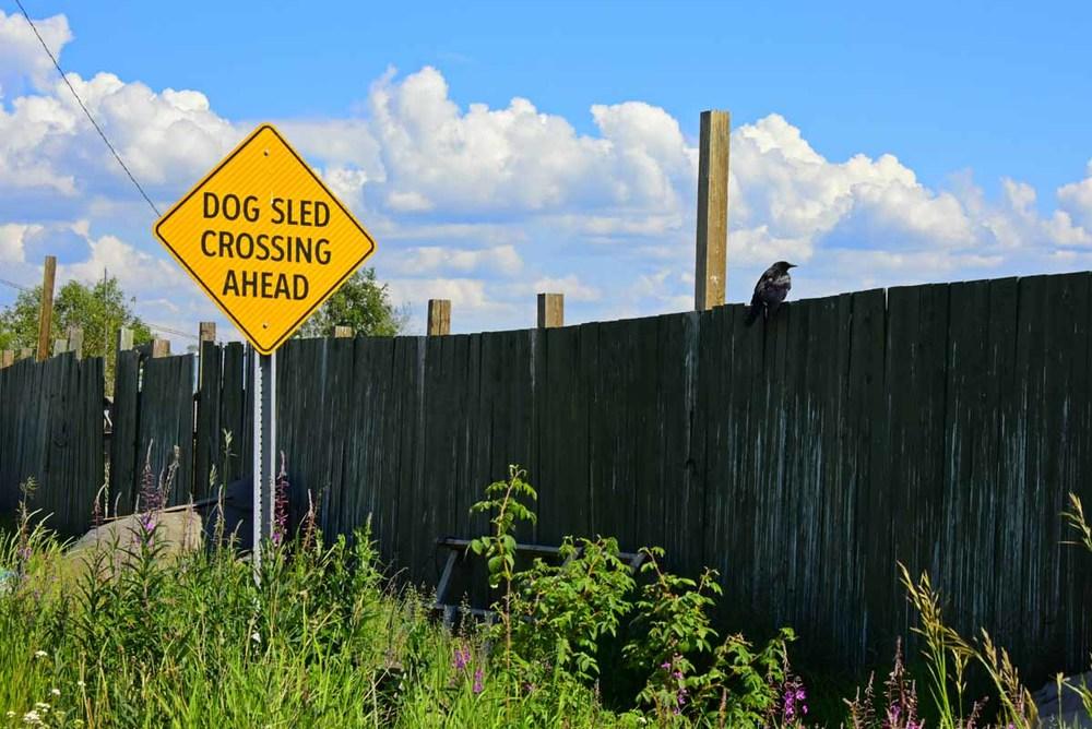 Dog Sled Crossing, Yellowknife NWT
