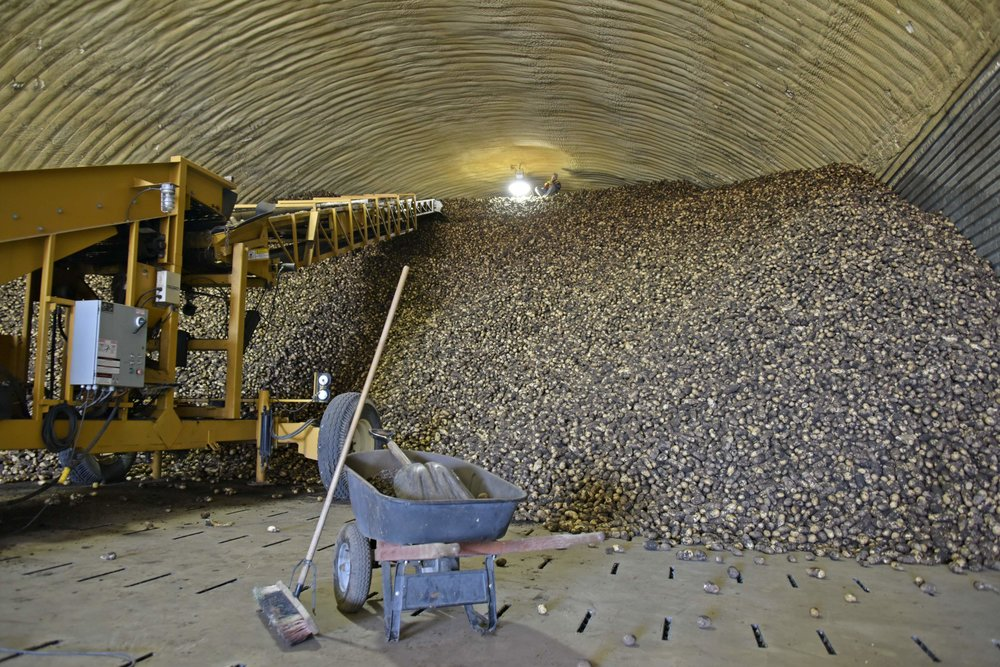 King of Potato Mountain, Potato production and storage facility in Manitoba | Photo Brandy Saturley