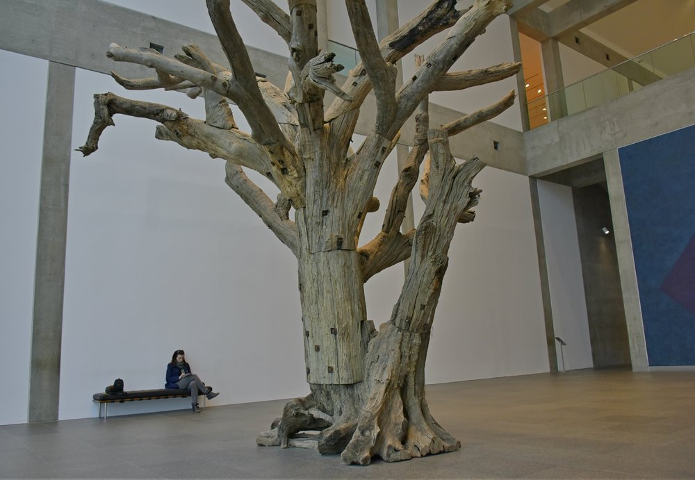 The Big Tree and an area of solace at the National Gallery of Canada in Ottawa