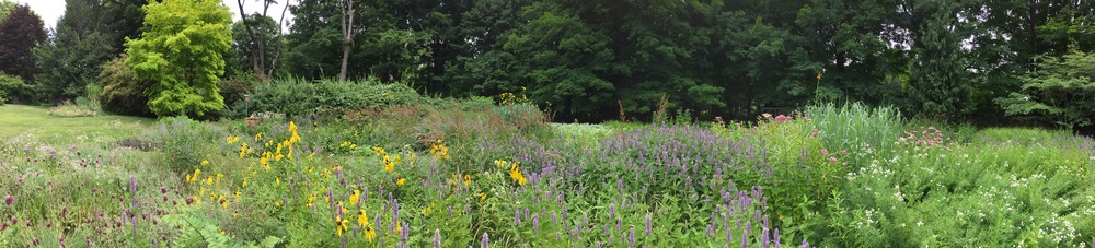 Summer Meadow Panorama