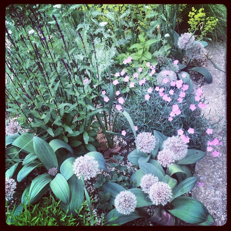 Herb gravel garden