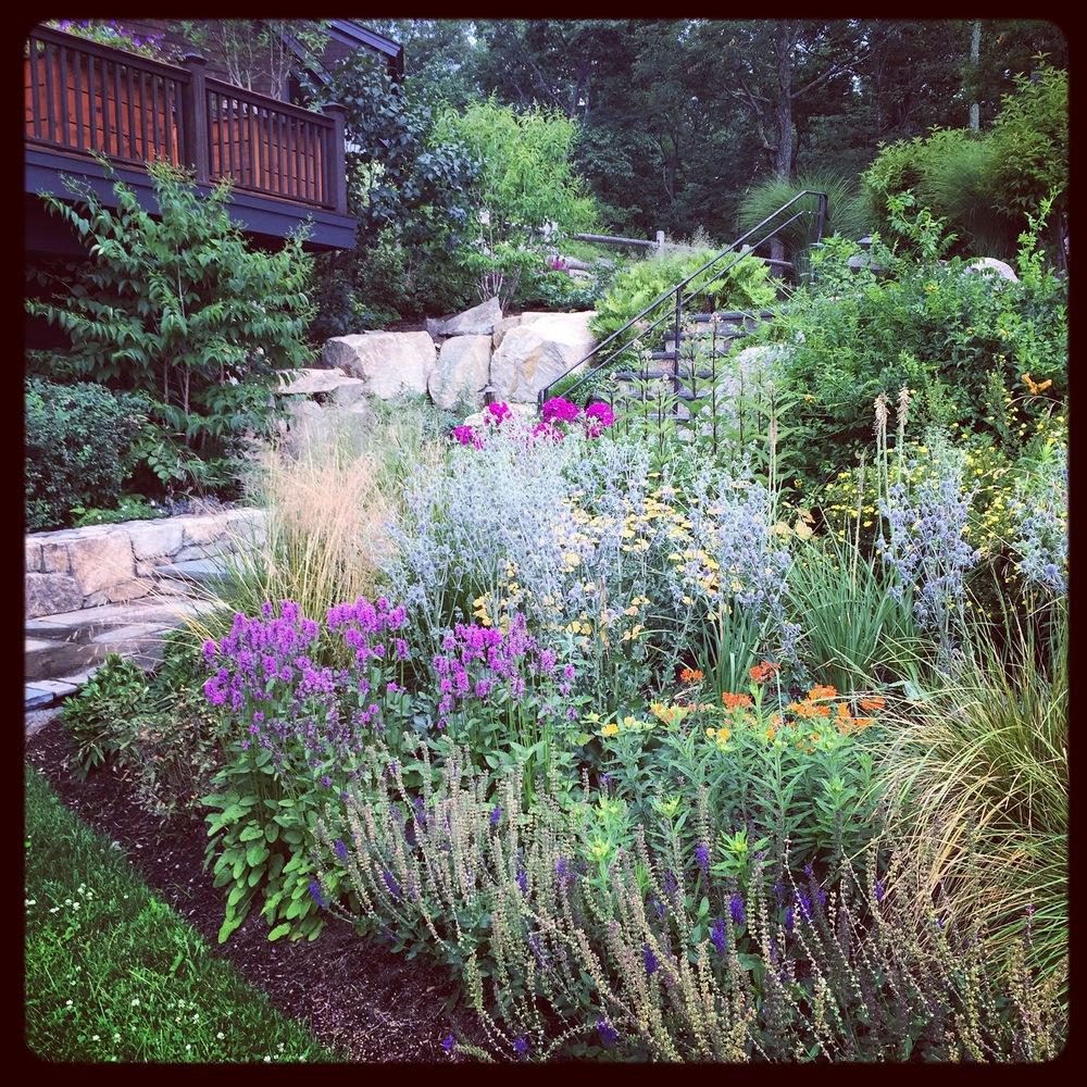 Poolside butterfly garden