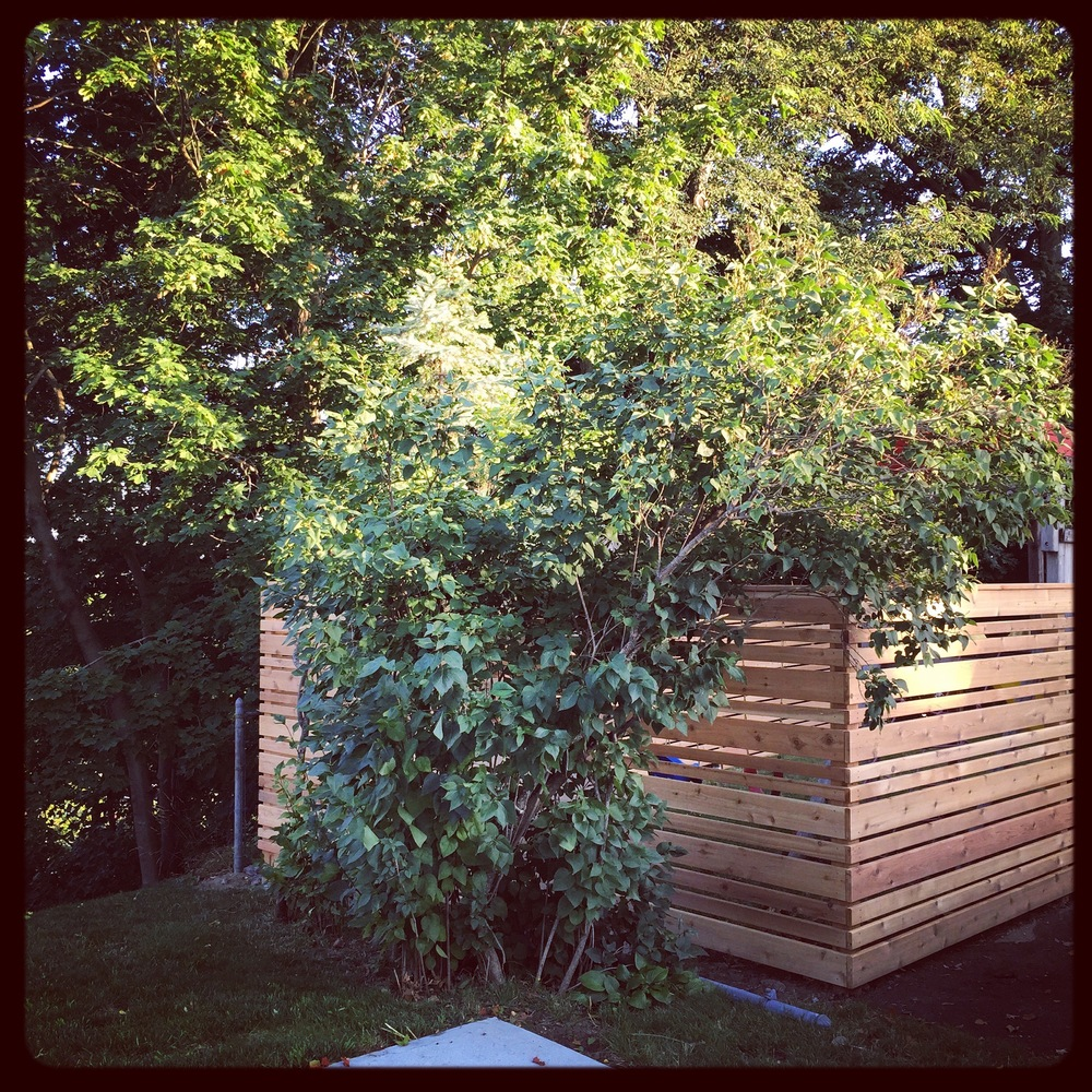 Contemporary Western Red Cedar fence