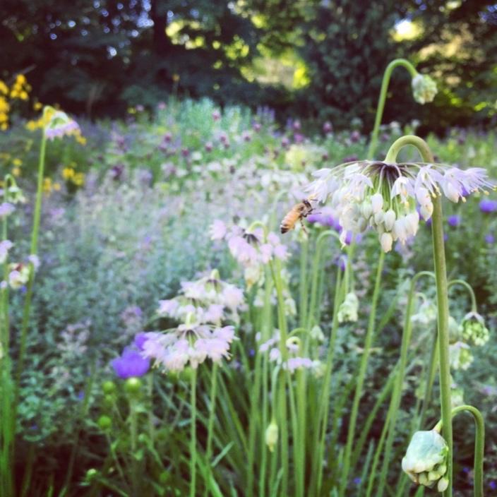 Wildlife Gardens & Habitats -