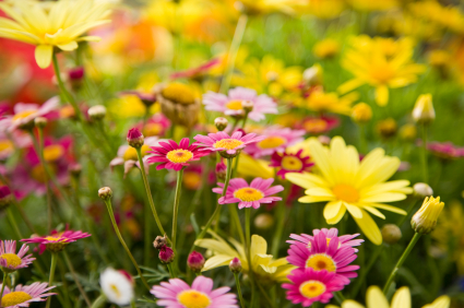 April showers bring may flowers april 14 18 boys girls club of httpprimarygamesscienceflowersfactsm mightylinksfo