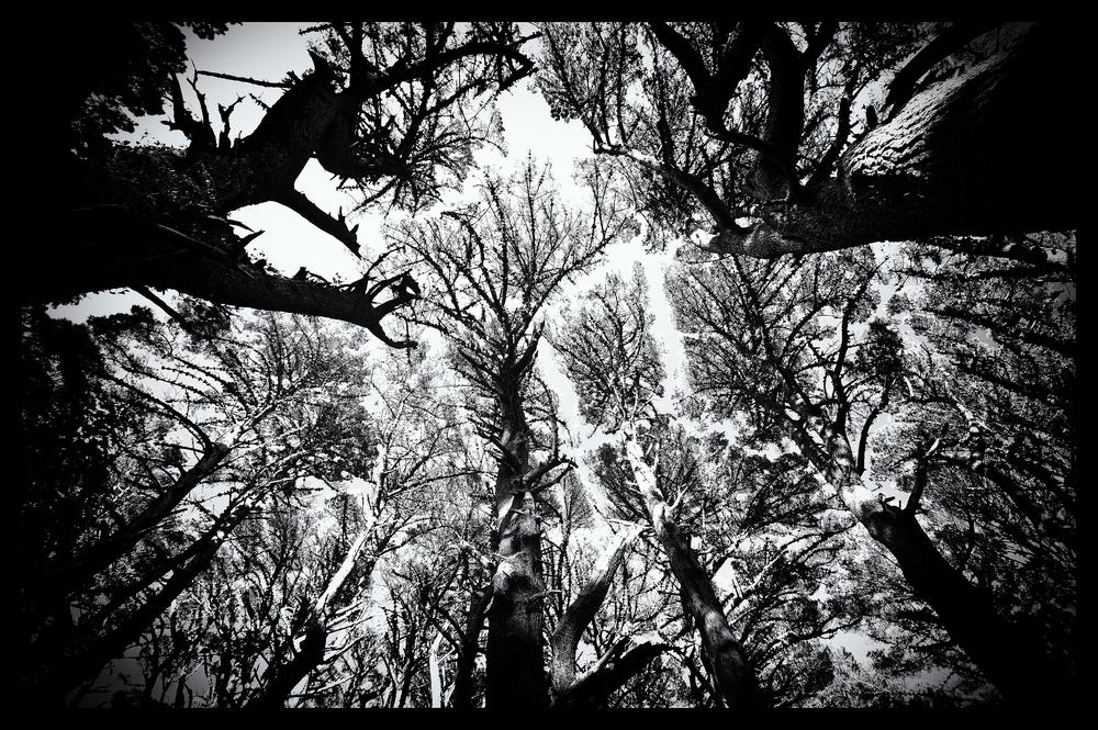 e-FOTOMDC TREES 4369.JPG