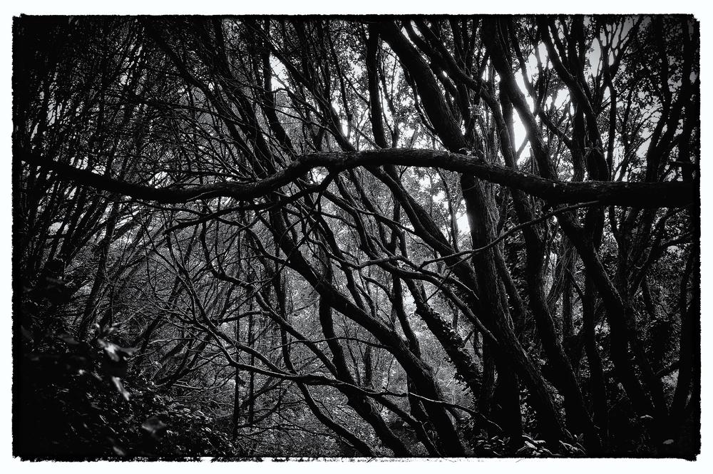 e-FOTOMDC TREES 4235.JPG