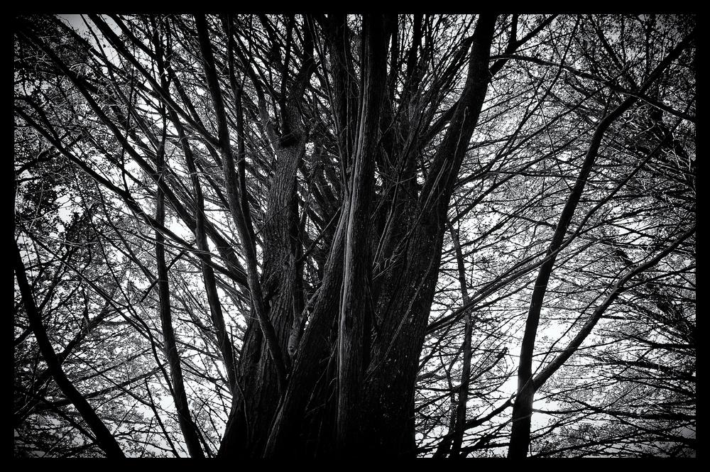 e-FOTOMDC TREES 4404.JPG
