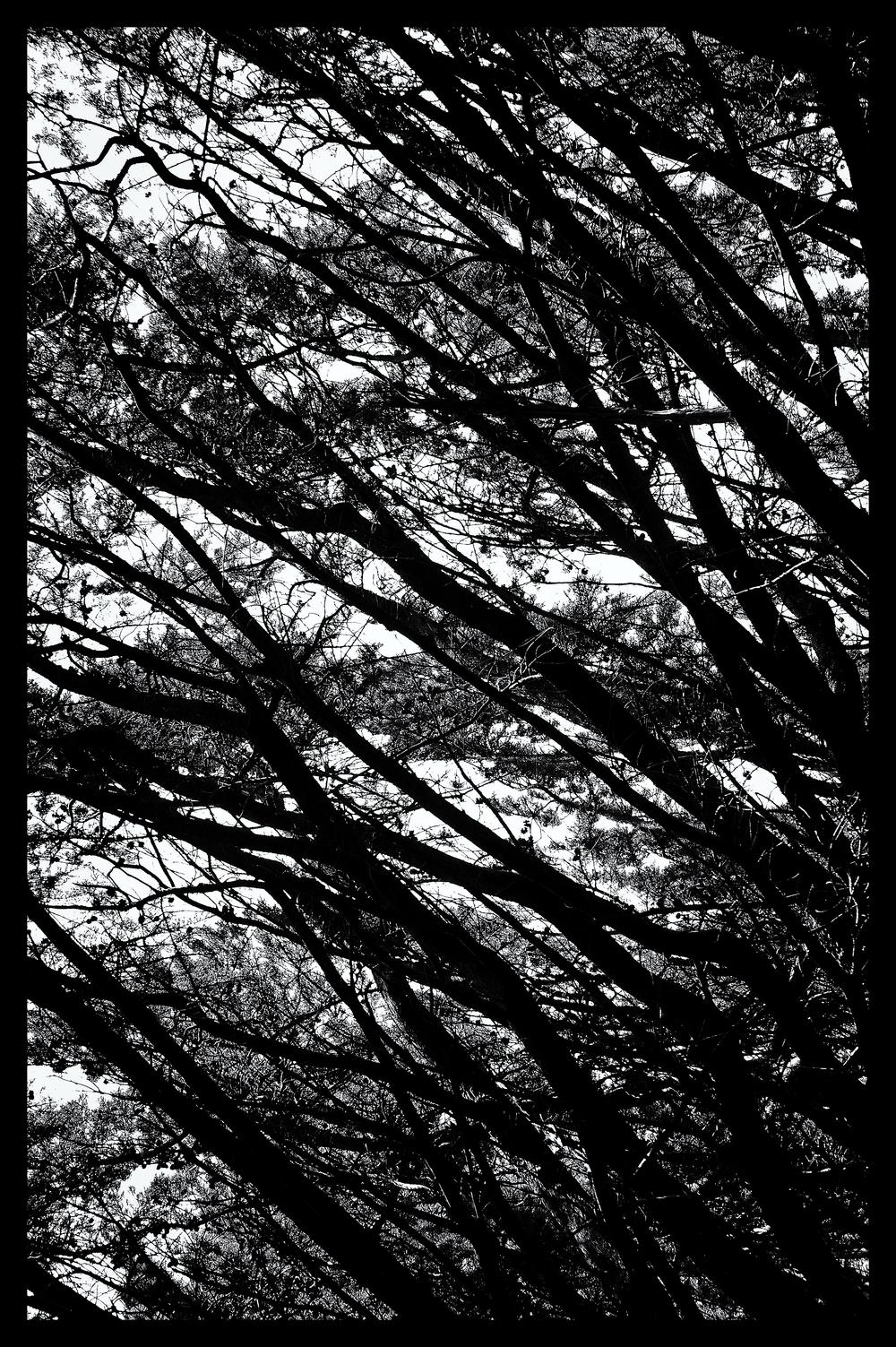 e-FOTOMDC TREES 4407.JPG