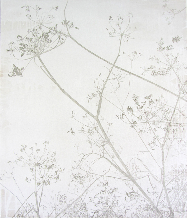Queen Anne's Lace - oil and gesso on canvas, 60 x 70 cm