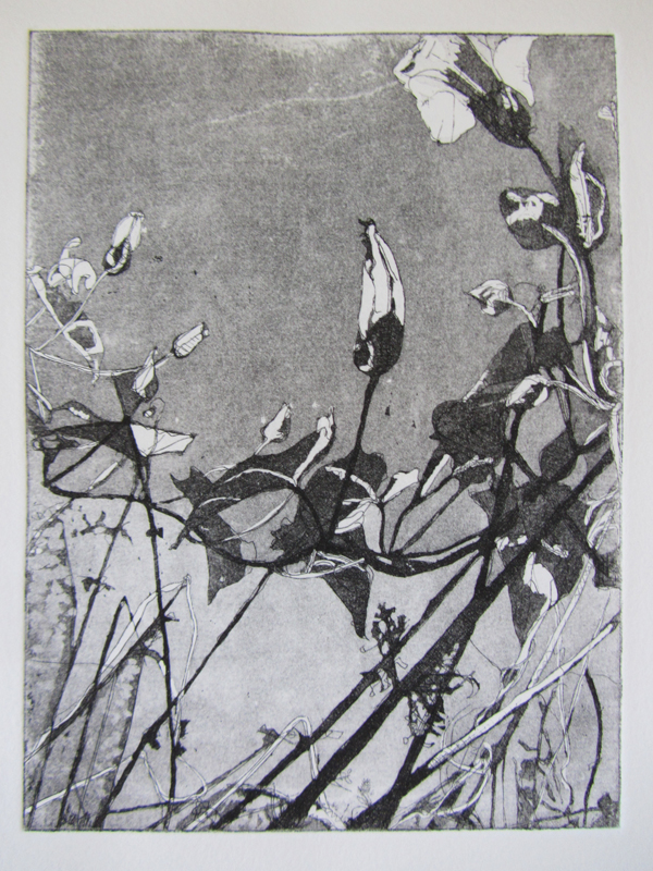 Bindweed, etching and aquatint, 162 x 122 mm