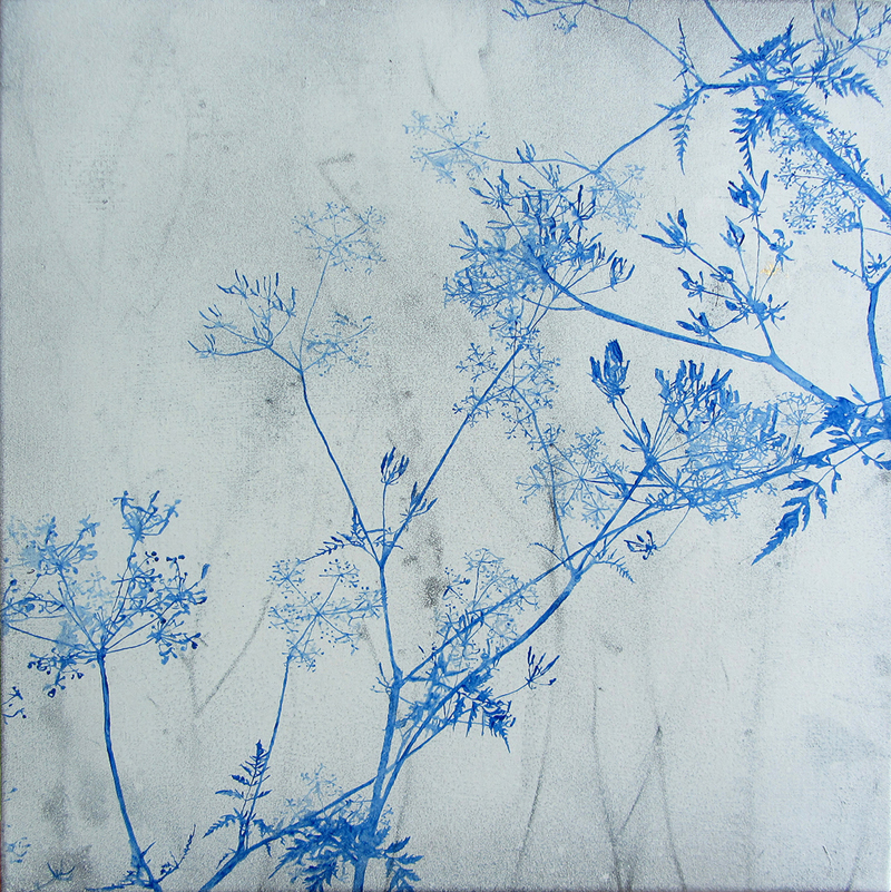 Wayside I (Queen Anne's Lace)  2016, oil and acrylic on canvas, 44 x 44 cm (framed)