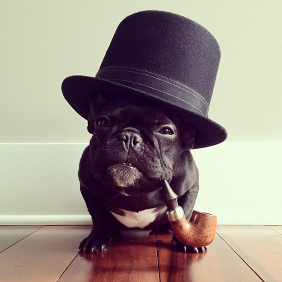 fuckyeahcuteanimalss :     (via  Cute Overload :D )     Like a Sir.