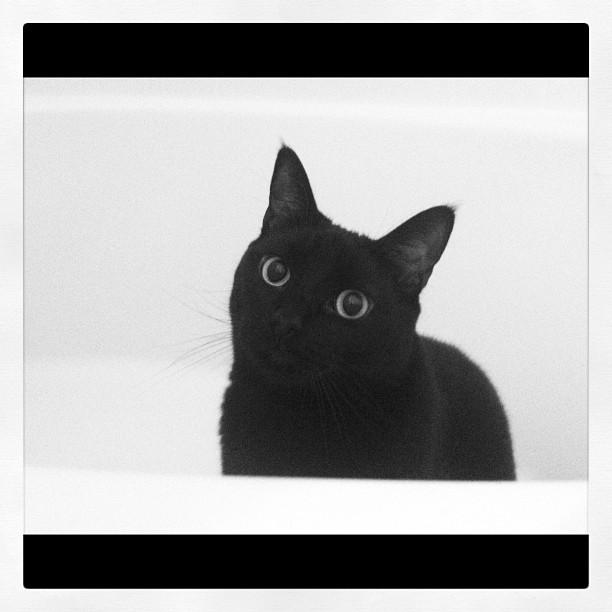 """my little guy """"Serif"""" (Taken with  instagram )"""