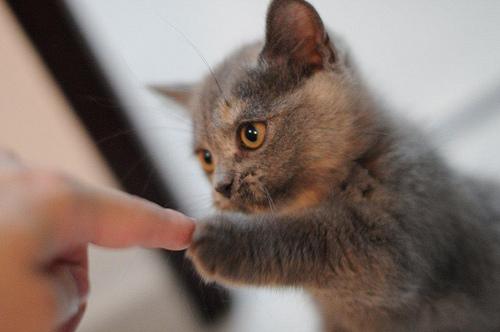 felinefriends :         http://catznstuff.tumblr.com/