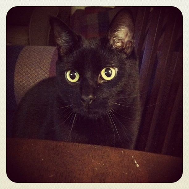 My son, Serif.  (Taken with  instagram )