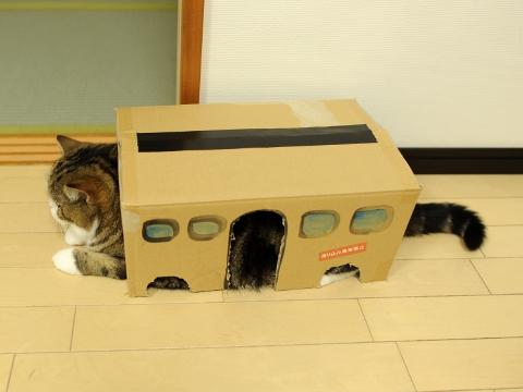 Cat bus!!!!