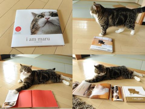 maruthecat :     Maru's brand new  book .