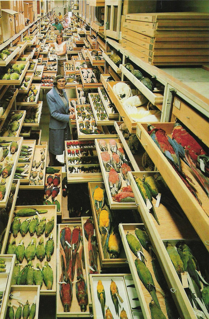 The Division of Birds storage facility in the  Smithsonian's National  Museum of Natural History . Photo:  Chip Clark    Thanks Adam Elmakias for this grossly overwhelming and interesting picture.