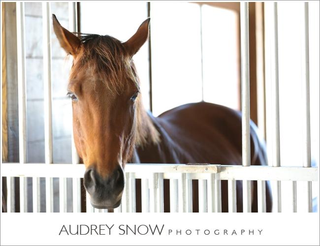 audreysnow-photography-naples-barn-wedding_1813.jpg