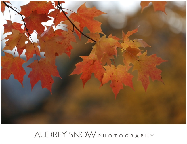 audreysnow-photography-princeton-engagement-session_3388.jpg