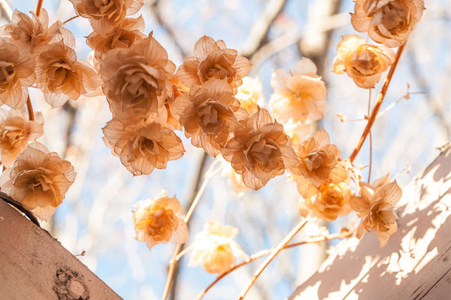 flowersInWinter.jpg