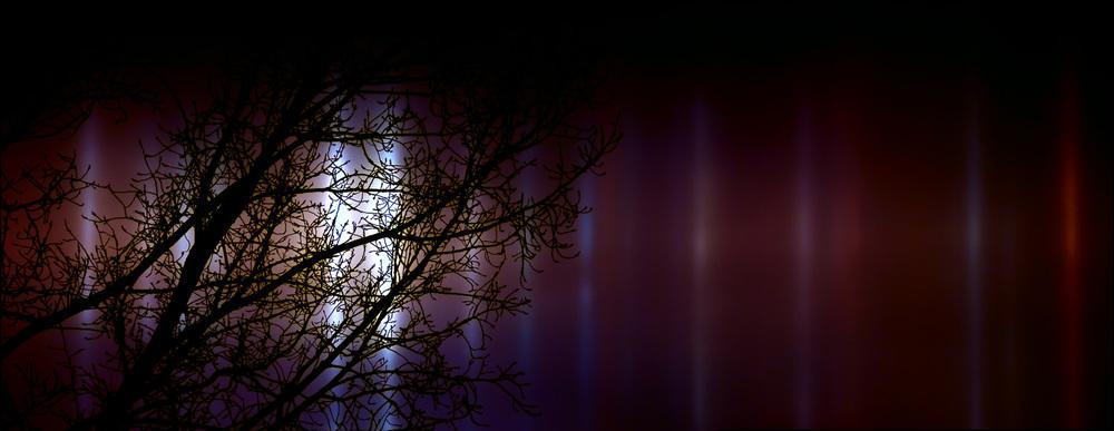 TreeSiloette3.jpg