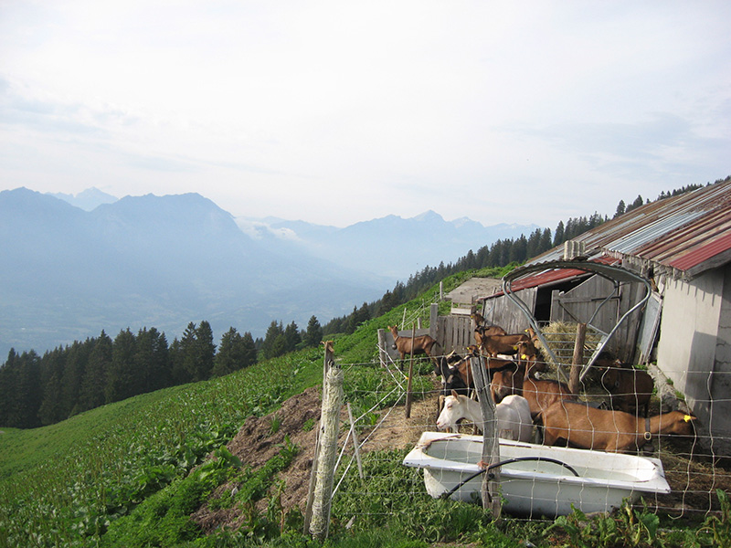 The commune's farm is at 1800m.