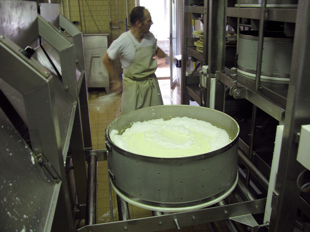 Curds draining in a mould
