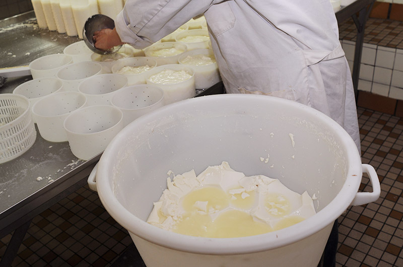 Curds are ladled into moulds