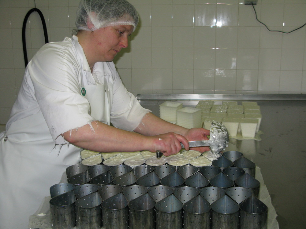 Ladling curds into 'feuille'-shaped molds