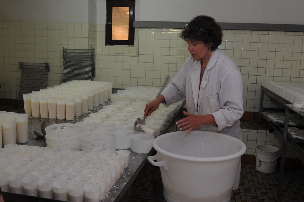 Isabelle ladling curds