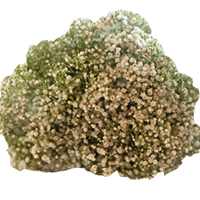 Baby's Breath   Season: Year Round  Colors: White  Price Range: Modest