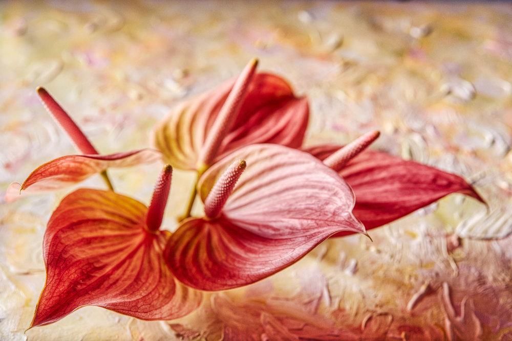 Painted Flowers orange.jpg