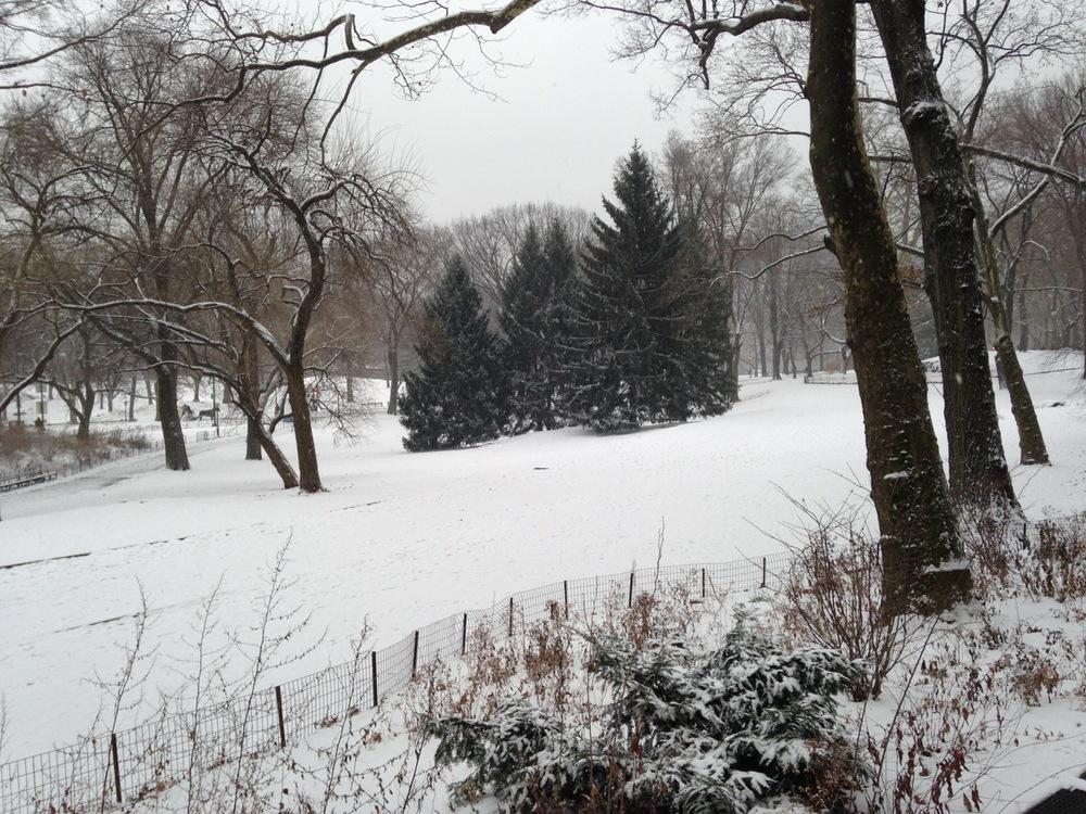 Central Park, fresh snow.