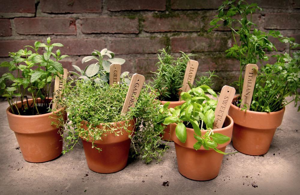 all in pots.jpg