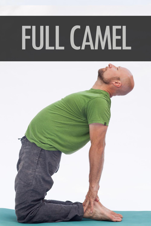 Full Camel.jpg