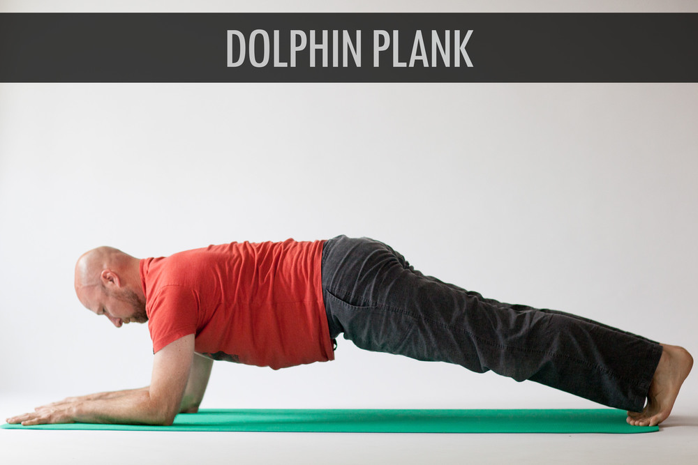 Dolphin Palnk.jpg