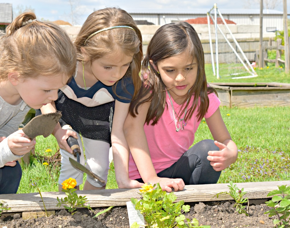 Students Exploring the Organic Gardens